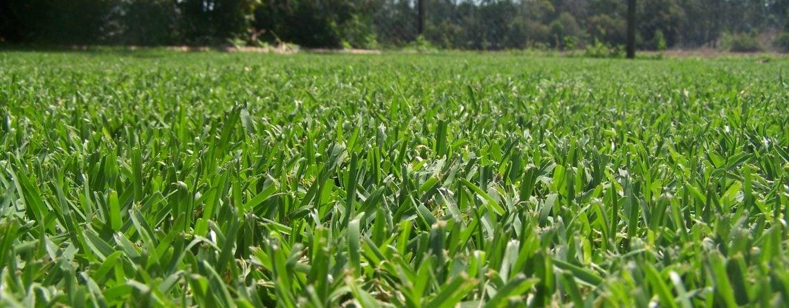 Sapphire Grass Turf