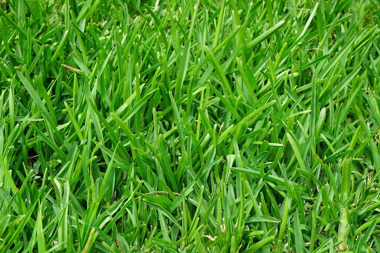 Shademaster Grass Turf